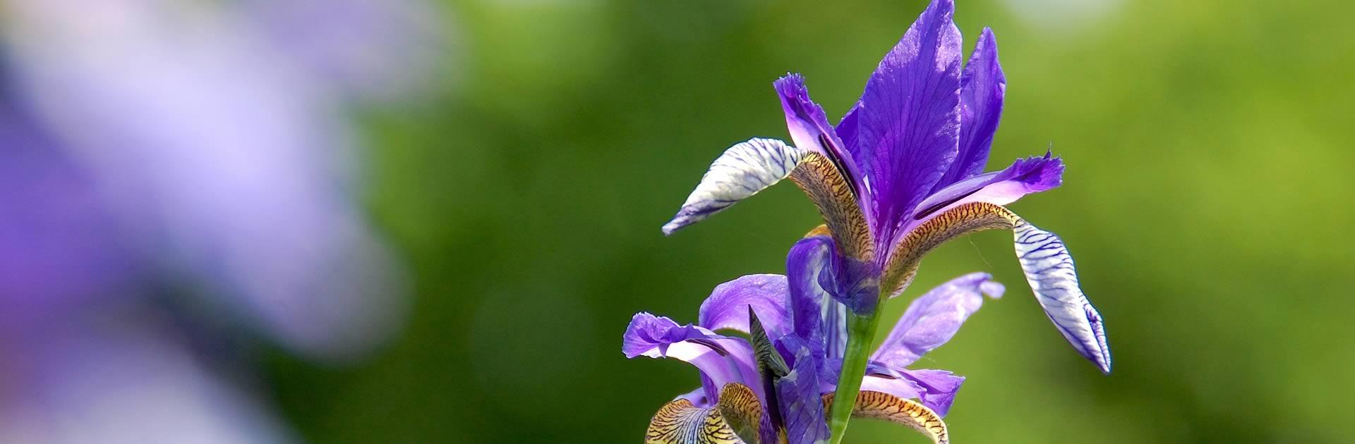slide-iris